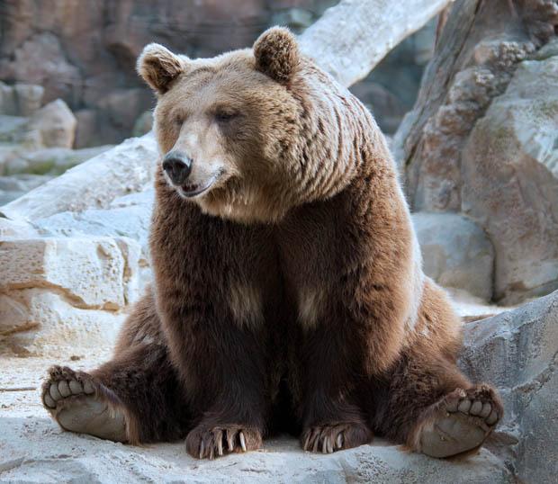 Joke of the day bears