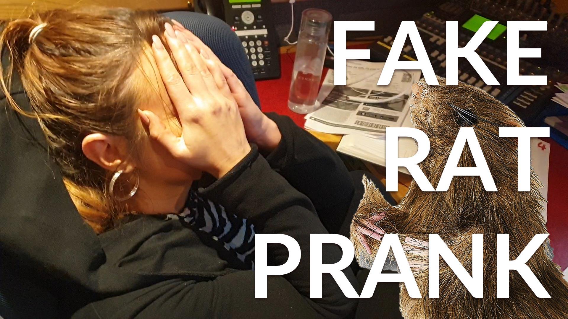 Fake Rat Prank Saoirse
